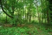 Claygate wood, Dene Park