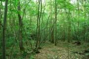 Woodland, Dene Park