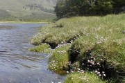 River Elchaig