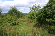 Young woodland near Blackdown Rings (2)