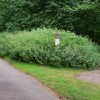 Bridleway leaves byway near Tilford