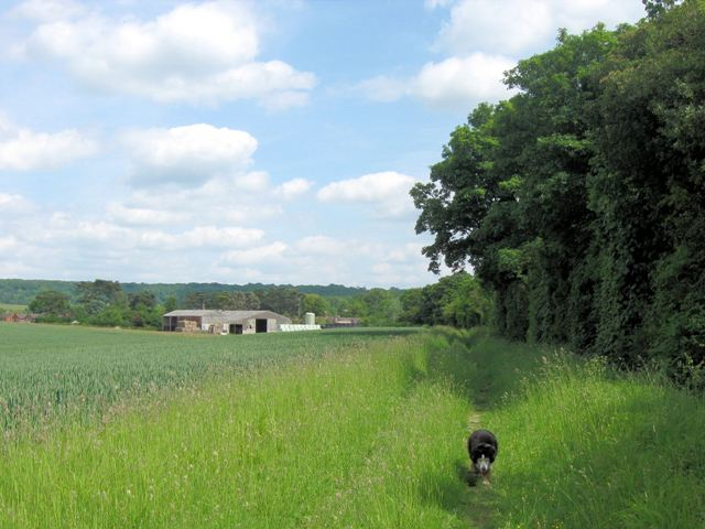 The higher canal-side footpath runs alongside a huge field of wheat near Tring Station