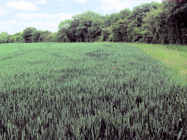 The Odd One Out – Alone in a monoculture