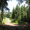 In Capler Wood