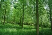 Sticklands Wood