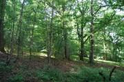 Woodland west of Bramble Reed Lane