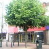 Tree in Gosport High Street