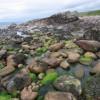 Torridonian beach