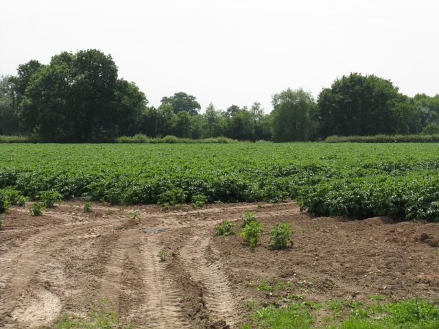 Field Near Kingsfield
