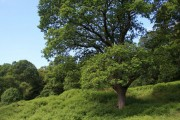 Mollinhead Wood