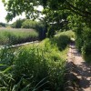 Path by Hackney Canal