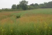 Farmland West of Elmswell