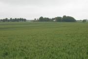 Farmland, Holmdale Farm
