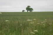 Farmland, Fridaythorpe Field