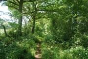 Bridleway towards Tollhurst Farm (2)