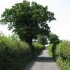 Lane To Burghill