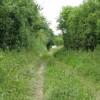 Footpath To Marden