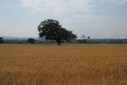 Farmland near Lower Kinnerton