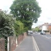 Tree in Brockhurst Road