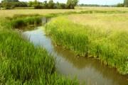 The River Isle at Hambridge