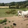 Ponies near Sandy
