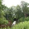 River Tone near East Nynehead