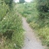 Path from the cycleway back to Leesland Conservation Area