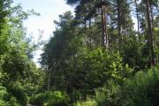 Covet Wood