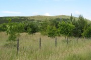 Woodland, Hill of Beath