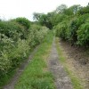 Back  Lane  Allerston
