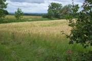 Farmland near Spring Clump