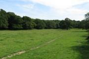 Bineham Wood near Chailey Common