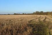 Farmland, Warborough