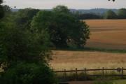 Wheat fields near Powder Mills