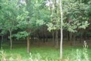 Woodland by the path, Powder Mills