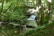 Woodland bridge Middleton