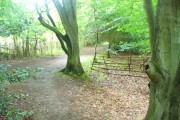 Cherkley Wood