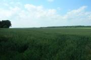 Farmland East of Avenue Farm