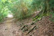 Cockshot Wood, White Hill