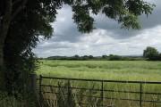 Ripening rape crop, Broadoak