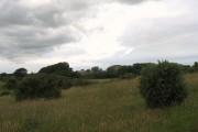 View across farmland towards Maen-gwyn Farm