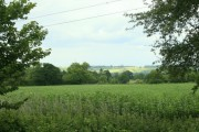 Pasture near Kington Langley