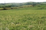 View westwards across farmland in the direction of Llannerch-y-medd