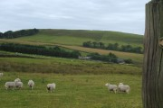 Wickinford Farm