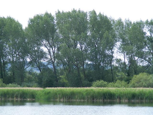Reedbeds at Marsworth Reservoir