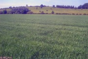Farmland near Long Reach