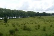 Woodland north of Bardowie Loch