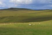 Pasture near Boreland