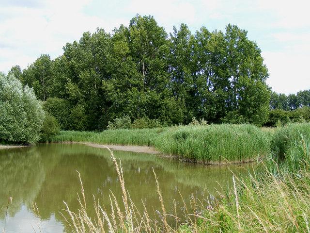 The bird reserve adjacent to Tring Sewage Works - black poplars