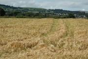 Barley Field beside Rectory Road